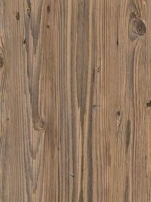 Forbo Impressa natürlicher Designboden zertifiziert mit Blauer Engel Umweltsiegel natural pine Planke 1000 x 250 mm, 2,5 mm Stärke, 3,0 m² pro Paket, Bodenbelag zur Verklebung oder ohne Klebstoff mit Unterlage Silent-Premium, einfach selbst verlegen, günstig online kaufen von Naturboden-Hersteller Forbo HstNr: fiti9007