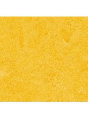 Forbo Marmoleum Click Linoleum-Parkett lemon zest einfach selbst zu verlegen