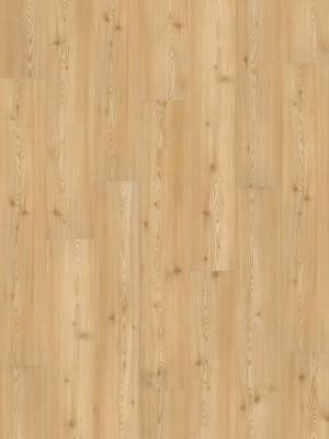 Wineo 1000 Purline PUR Bioboden Wood Planken zur vollflächigen Verklebung Carmel Pine Planke 1298 x 200 mm, 2,2 mm Stärke, 5,19 m² pro Paket Preis günstig Bio-Designboden kaufen von Design-Belag Hersteller Wineo HstNr: PL048R *** Bio-Designboden Lieferung ab 12 m² ***