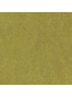Forbo Marmoleum Linoleum Real Naturboden olive green Stärke 2,5 mm, Rollenbreite 2 m, Linoleumbelag --- Mindestbestellmenge 6 m² !!!  --- günstig online kaufen von Naturboden-Hersteller Forbo HstNr: mr3239