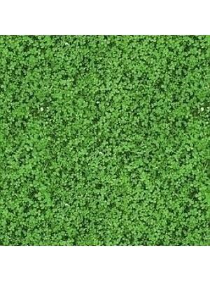 Forbo Flotex Teppichboden Vision Image Objekt-Boden Shamrock, Rollenbreite 2 m, Teppich-Bodenbelag günstig online kaufen von Teppich-Hersteller Forbo HstNr: i000430