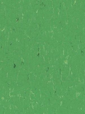 Forbo Linoleum Uni Marmoleum Piano nettle green, Rollenbreite 2,0 m, Stärke 2,5 mm, Linoleumbelag im Fachhandel günstig online kaufen von Linoleumboden-Hersteller Forbo HstNr: 3647