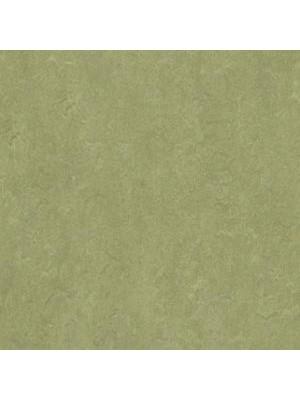Forbo Marmoleum Linoleum Real Naturboden willow Stärke 2,5 mm, Rollenbreite 2 m, Linoleumbelag --- Mindestbestellmenge 6 m² !!!  --- günstig online kaufen von Naturboden-Hersteller Forbo HstNr: mr3240