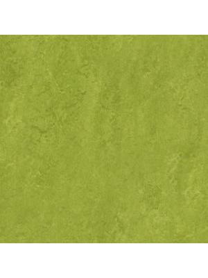 Forbo Marmoleum Linoleum Real Naturboden green Stärke 2,5 mm, Rollenbreite 2 m, Linoleumbelag --- Mindestbestellmenge 6 m² !!!  --- günstig online kaufen von Naturboden-Hersteller Forbo HstNr: mr3247